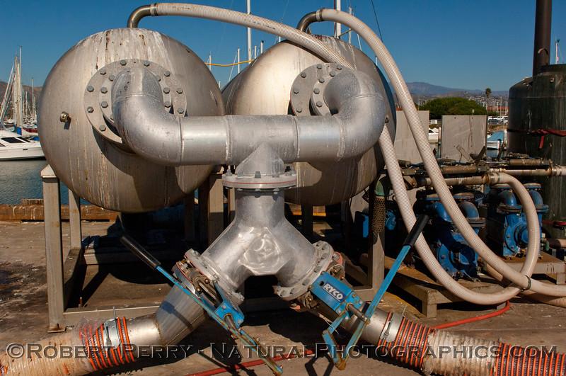 Loligo squid processing 2011 11-25 - Ventura Hbr - 035