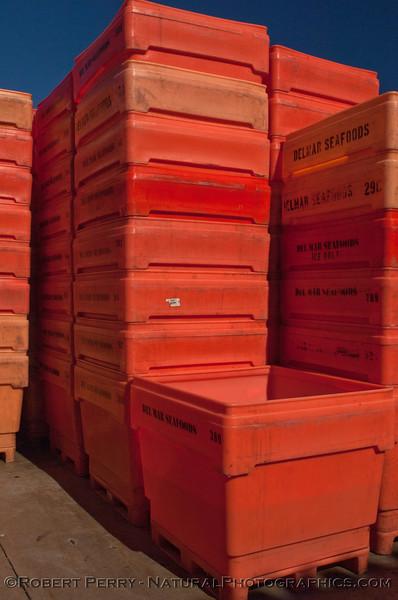 Loligo squid processing 2011 11-25 - Ventura Hbr - 012
