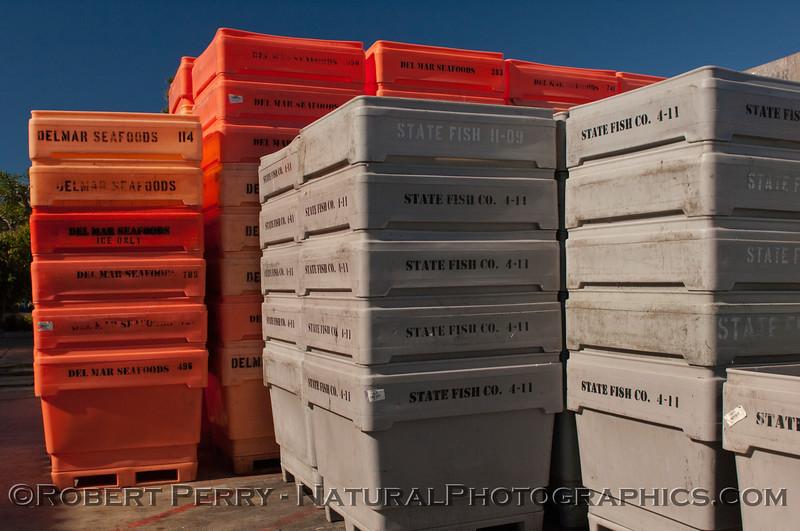 Loligo squid processing 2011 11-25 - Ventura Hbr - 005