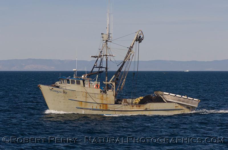 vessel squid seiner Ferrigno Boy 2008 01-02 Sta Cruz Channel--1010