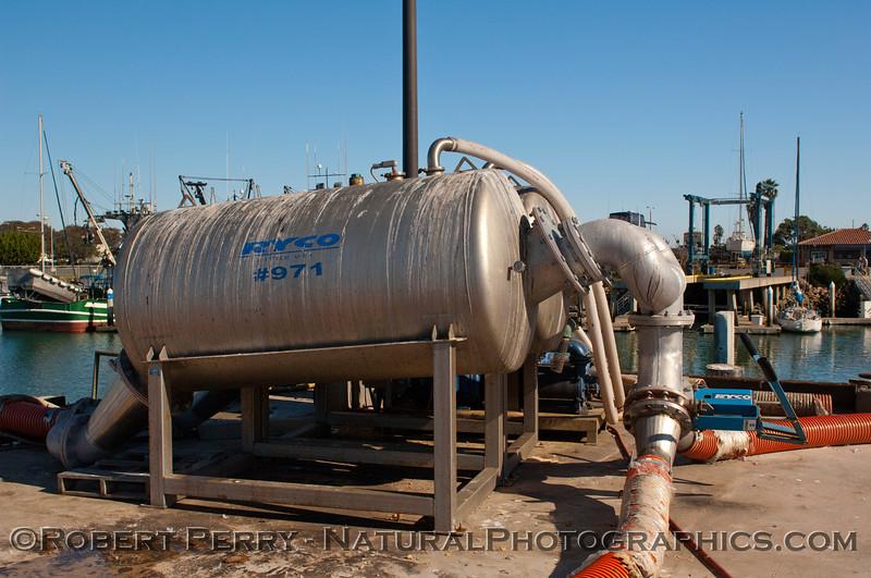 Loligo squid processing 2011 11-25 - Ventura Hbr - 033