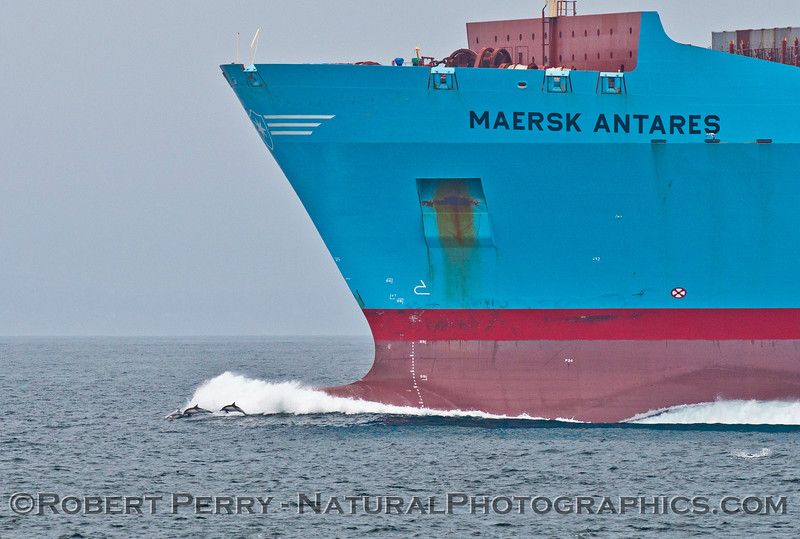 vessel container Maersk Antares & Delphinus riding bow 2013 07-11 SB Channel-060