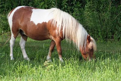 annalisepetphoto horse7 IMG_5135