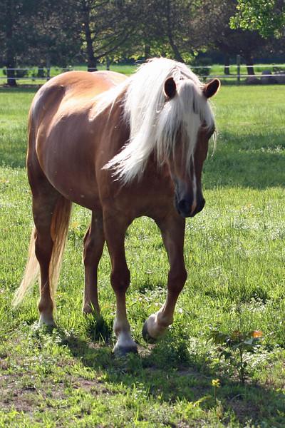 annalisepetphoto horse8 IMG_5130