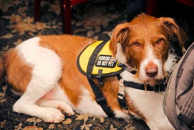 Spencer, wonder dog and loyal friend to Clara Acker