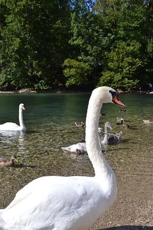 2015-08-22 - GER Neuschwanstein - 052