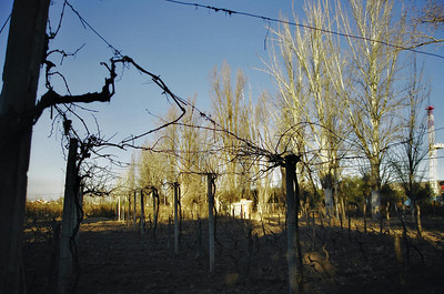 Mendoza , Argentina 2007
