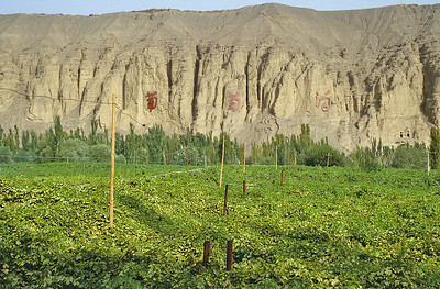 Grapevines in Putao Gou, Xinjiang, Silk Road