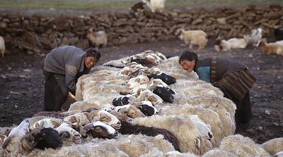 Gyantso-la (5.220m), Friendship Highway, Tibet
