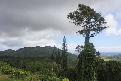 Along the Pali Highway, Oahu, Hawaii