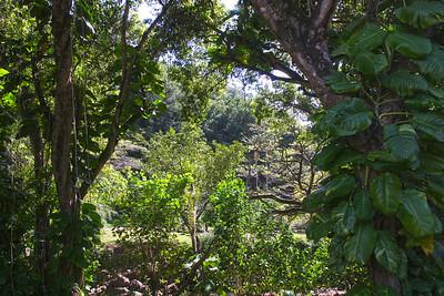 Waimea valley, Oahu, Hawaii