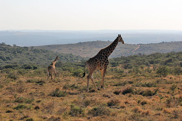 Amakhala Game Reserve, South Africa