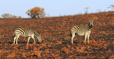 Ithala Game Reserve, South Africa