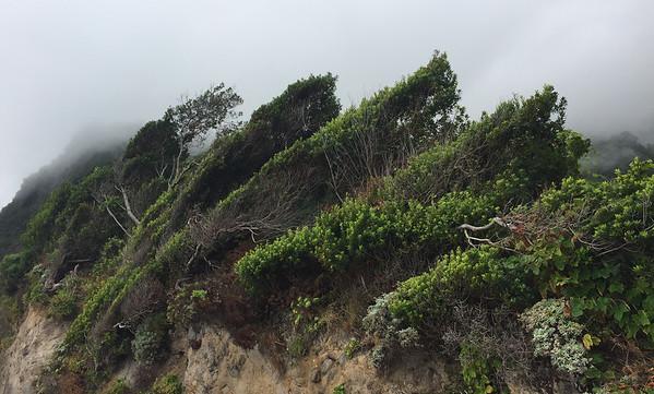 Miradouro do Veu da Noiva, Madeira