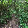 Cross Island track, Rarotonga, Cook Islands