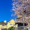 Bainbridge island, Seattle, USA