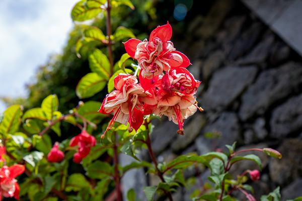Santo Amaro, São Jorge, Azores