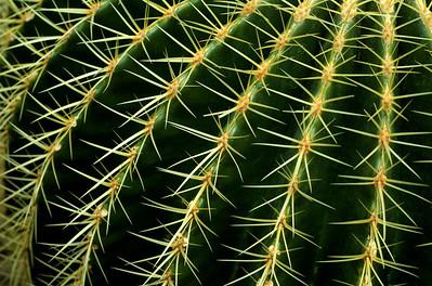 Me encantaros los cactus.