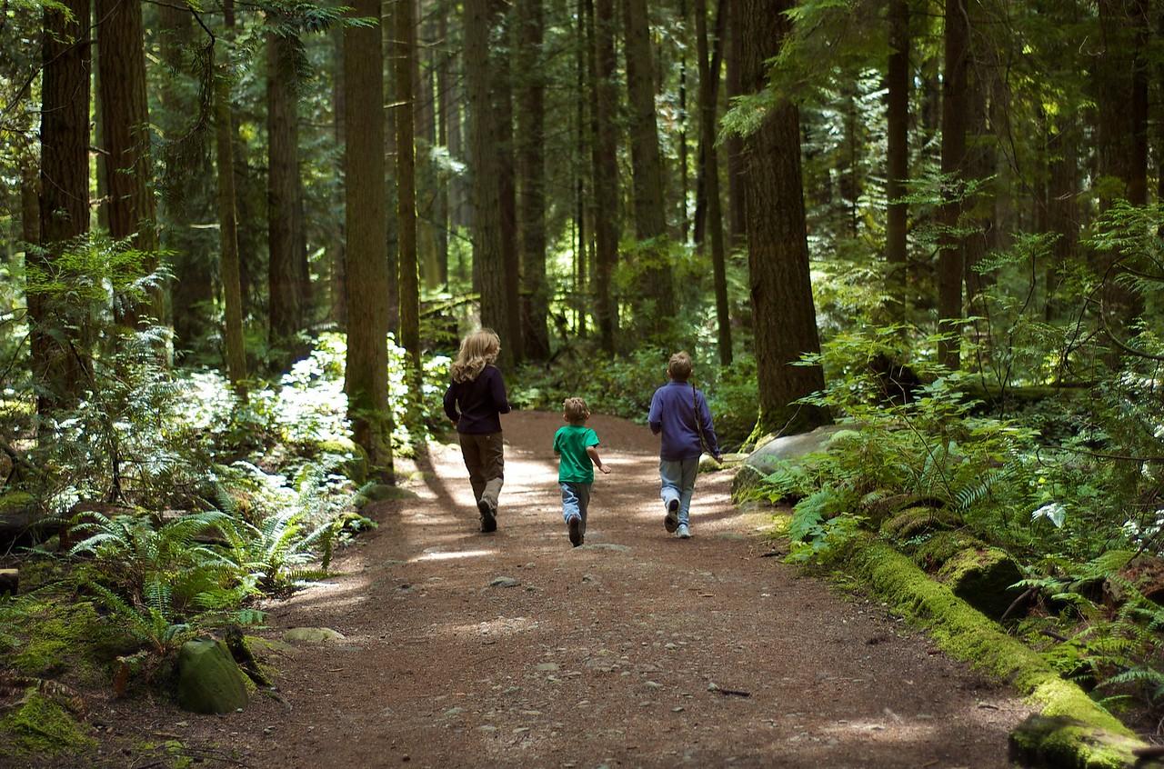 ... Un bosque con infinidad de caminos. Ideal para correr o montar en bici!