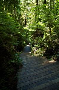 El camino, en algunos tramos, tenía escaleras de madera como estas.