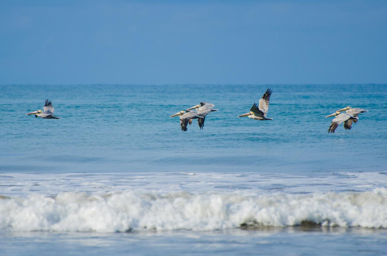 Bandada de pelícanos sobrevolando la playa.