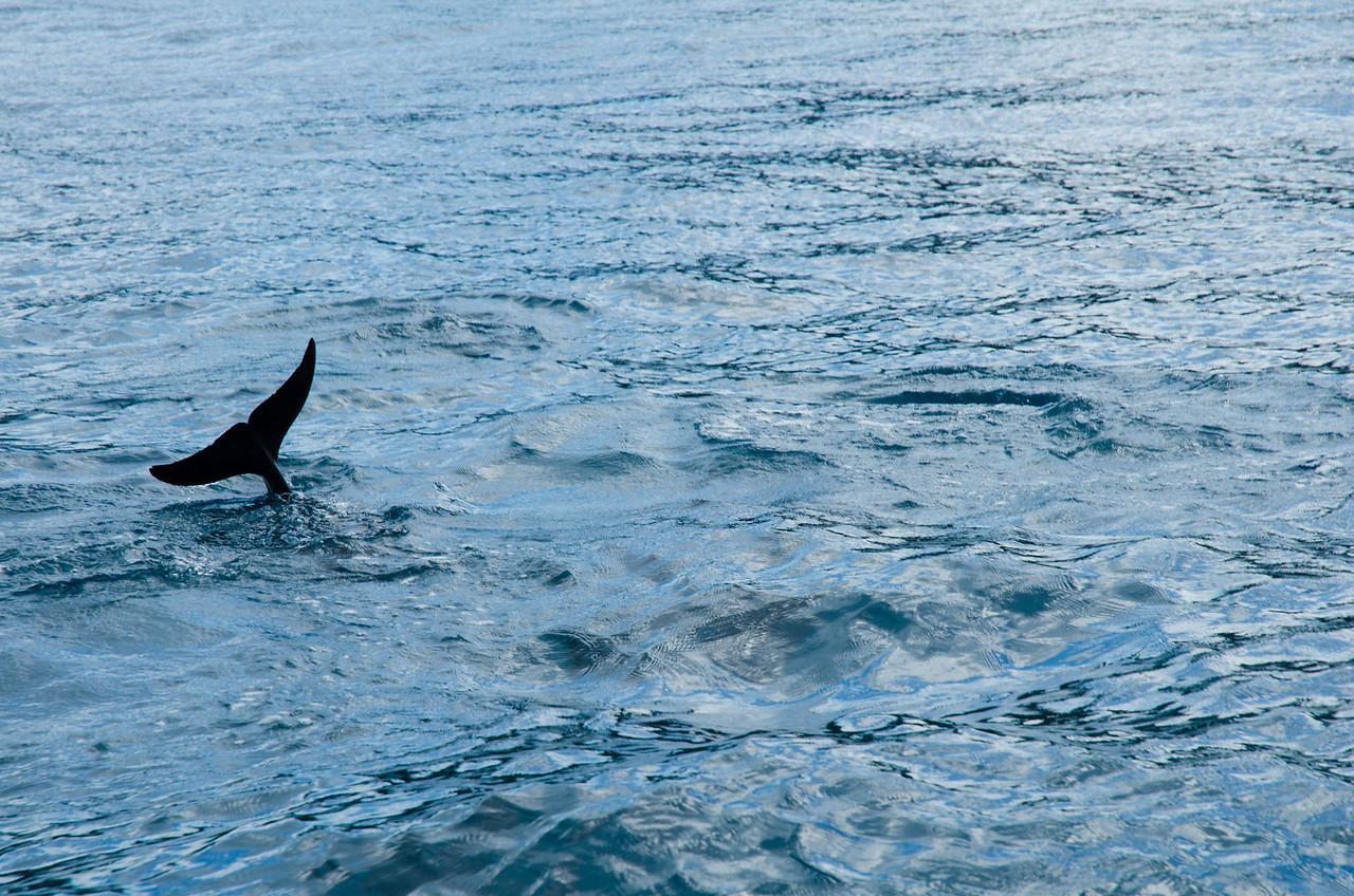 Algún delfín se acercó por curiosidad.