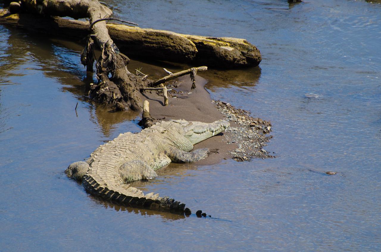 Camino a San José, paramos a ver los cocodrilos.