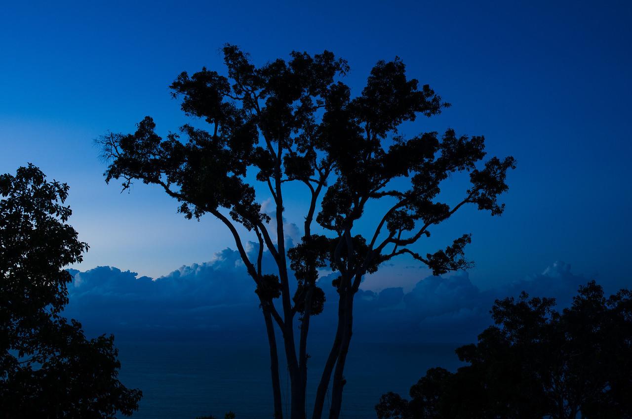 Amanecer en Punta Gabriela, este árbol preside la finca.