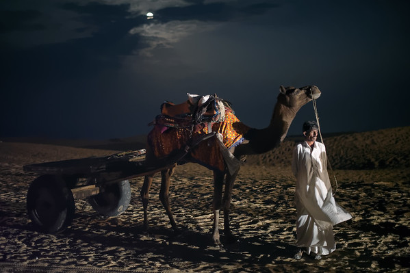 Camel in the desert under full moon