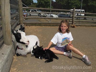 Beacon Hill Petting Zoo