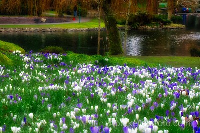 Beacon Hill Park Spring