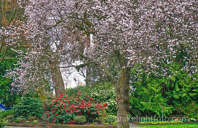 Beacon Hill Park Spring