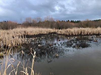 Rithets Bog