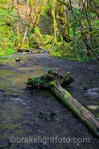Tod Creek