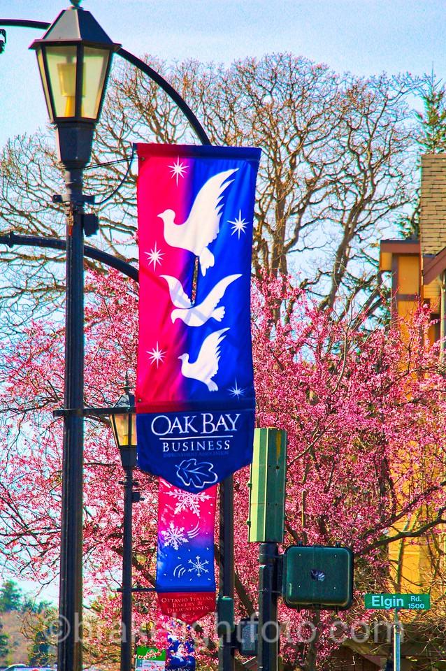 Oak Bay Blossoms