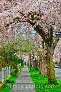 Spring blossom in James Bay