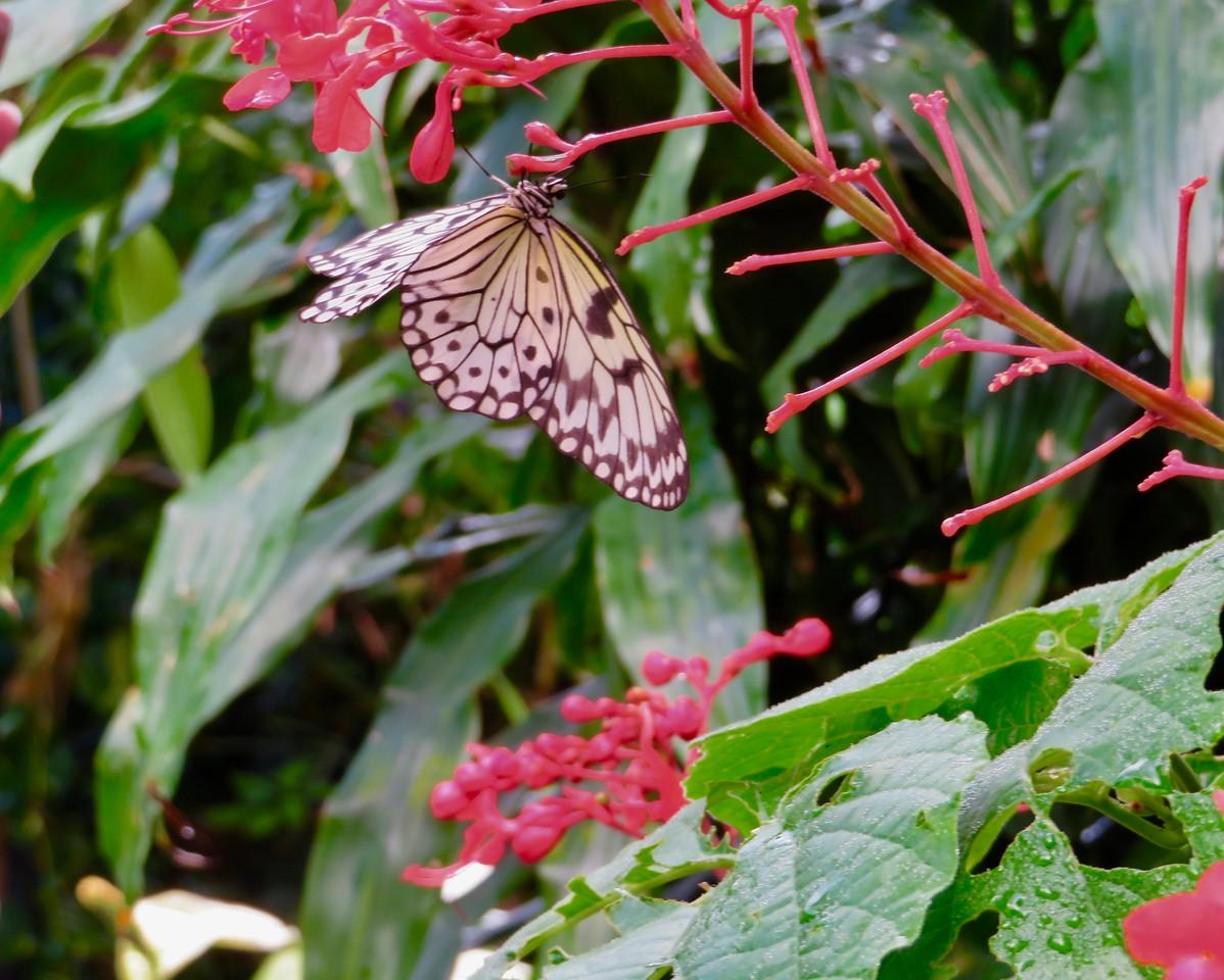 Victoria Butterfly Garden