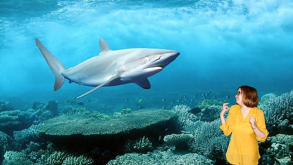 hd-image-of-shark-at-blue-ocean-nice-wallpaper