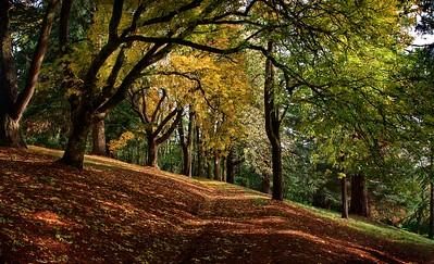 Daylesford autumn