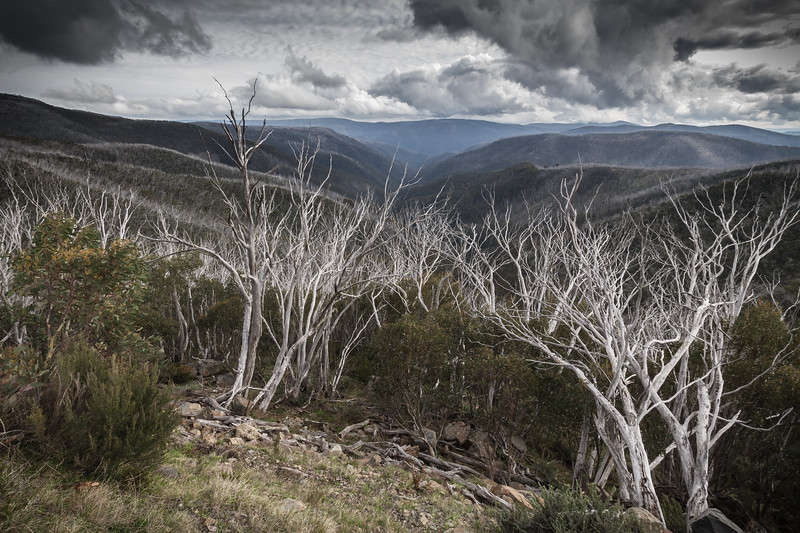 Victorian High Country Nov 2015