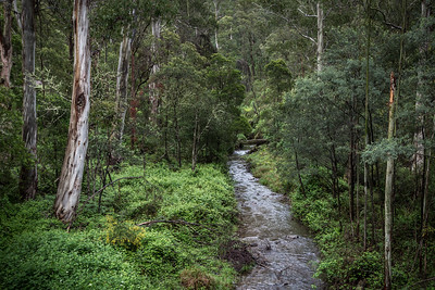 Victorian High Country Nov 2015 High Country Victoria