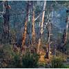 Sheepyard Flat Forest