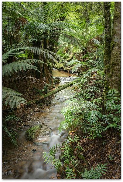 Stream  Through Toolangi Forest