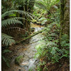 Stream  Through Toolangi Forest