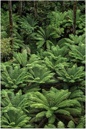 Ferns Galore
