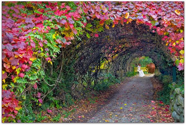 Autumn Archway