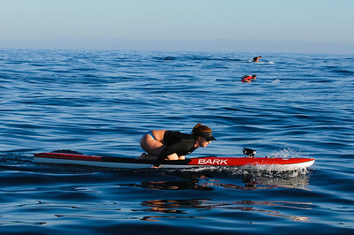 Paddle Board Race - shot from a moving Zodiac