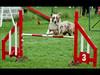 Caro et Ema Agility 2 - Jumping 2