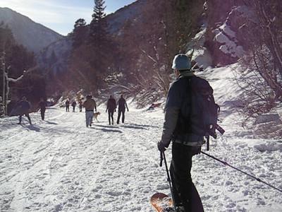 Mill Creek Dog Slalom