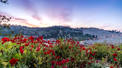 Sunrise over the Mount of Olives